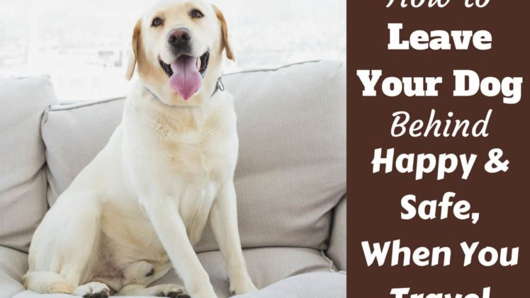 5 Reasons Why A Pet Can Be Good For Your Health And Mindset